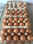 34 eieren